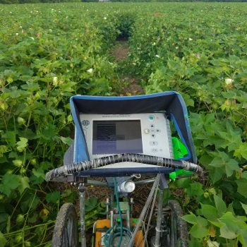 Scanning in high cotton.